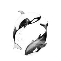 Tattoo Designs Drawings Sketches Yin Yang Ideas For 2019 Orca Tattoo, Hai Tattoos, Body Art Tattoos, Tatoos, Tattoo Design Drawings, Art Drawings, Tattoo Designs, Tattoo Ideas, Orcas