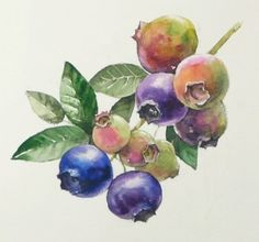 (wet-in-wet. Watercolor Fruit, Watercolor Drawing, Watercolor Landscape, Watercolor Flowers, Watercolor Paintings, Fruit Painting, Landscape Drawings, Fruit Art, Botanical Art