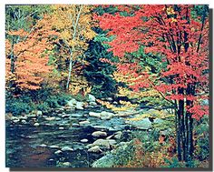 Get appreciated for your unique taste in home décor by getting home these gorgeous red trees in forest with stream landscape scenery poster. This nature inspired poster will surely help to bring nice change in your décor pattern and enhance your home decor instantly. It would also make a great gift for those who may inspired by the tranquility of nature. Grab this charming poster for its high quality gloss finish paper with archival quality inks.