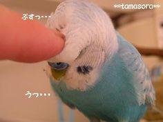 うっ・・・2009.7.29.JPG