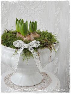 Love hyacinths..