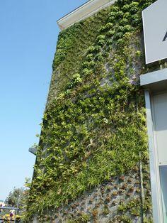 Mur végétal de Patrick Blanc, Inauguration du centre commercial Alpha Park II, Les Clayes-sous-Bois (78), 4 septembre 2012, photo Alain Delavie  http://www.pariscotejardin.fr/2012/09/le-mur-vegetal-gigantesque-du-centre-commercial-alpha-park-ii-aux-clayes-sous-bois-78/