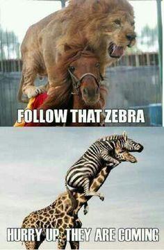 jajjajaa me partoooo :')  Lol!! All my fav animals