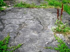 Stromatolites in outcrop, cryptozoon proliferum (Hall, 1882). Hoyt limestone, late Cambrian (~500 Ma). Lester Park, Saratoga Springs, N.Y., July, 2012.