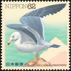 Black-tailed Gull stamps - mainly images - gallery format