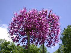 Garden Gateway - Dawes Arboretum