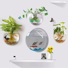 Pot Plant Wall Mounted Hanging Bubble Bowl Fish Tank Aquarium Home Decoration #Unbranded