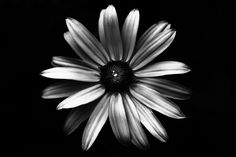 And White Abstract Black Abstract Picture
