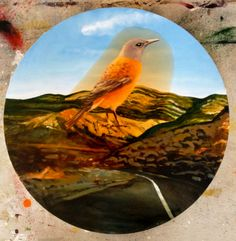 lovely chap this, called a rock thrush, in my beloved Meiringspoort, Klein Karoo Bird Illustration, Illustrations, Tweet Tweet, My Land, Afrikaans, Heartland, Bird Art, Beautiful Birds, South Africa