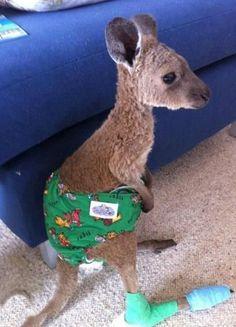 Baby Kangaroo Wears Diaper - SunnyLOL