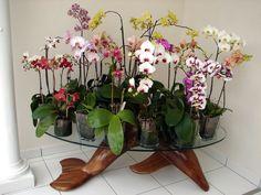 les beaux phaleanopsis en pot de verre de Réjane. Allez voir comment faire!!!! Shanon Jeurissen