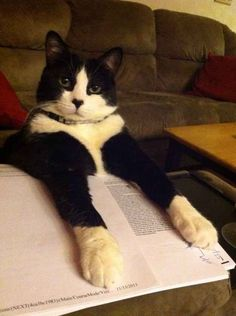 Community: 23 Cats Who Demand That You Take A Study Break Right Now