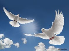 releasing doves entrance - Google Search