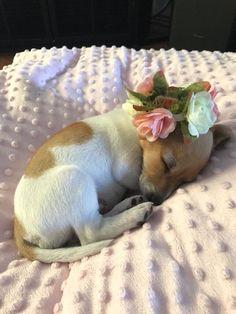 Fancy & Snuggly Pup