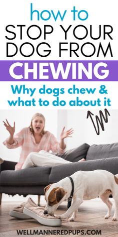 How to stop your dog from chewing everything (his bed, wood, furniture, and more). Learn why dogs chew & what you can do about this behavior. Stop Dog Chewing, Training Your Puppy, Dog Training Tips, Interactive Dog Toys, Dog Varieties, Dog Products, Dog Hacks, Dog Chews