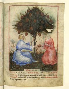 Nouvelle acquisition latine 1673, fol. 14, Récolte des pignons. Tacuinum sanitatis, Milano or Pavie (Italy), 1390-1400.