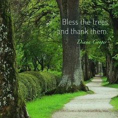 Bless the trees....