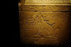 Image result for egyptian cat coffin images