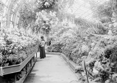 Chicago Lincoln Park conservatory  in 1906