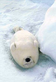Nap Time.  Do not disturb......How cute is he?