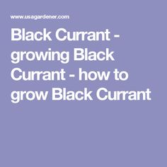 Black Currant - growing Black Currant - how to grow Black Currant