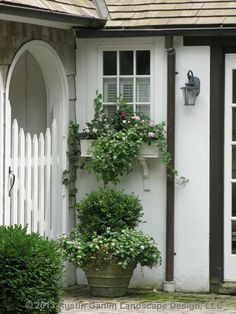 A traditional container concept using boxwood as the centerpiece, accompanied by ivy and lamium. A complementary window box with double impatiens and a similar trailing plants adds interest to the composition.