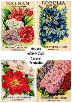 Free printable antique flower seed packet images for your creative projects! Print & frame as home decor, create greeting cards & more!
