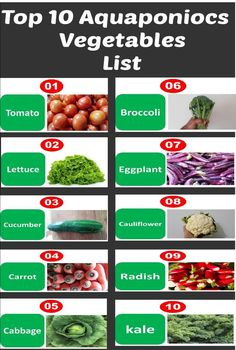 """Top 10 aquaponics vegetables list every body should know """"Break-Through Organic Gardening Secret Grows You Up To 10 Times The Plants, In Half The Time, With Healthier Plants, While the """"Fish"""" Do All the Work. Aquaponics System, Aquaponics Greenhouse, Aquaponics Fish, Hydroponic Gardening, Organic Gardening, Gardening Tips, Vintage Gardening, Hydroponic Vegetables, Hydroponic Growing"""