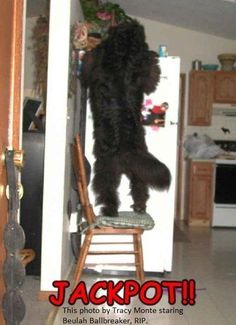 now that's a determined newfie!!!! http://www.campbowwow.com/us/nc/charlottemetro/