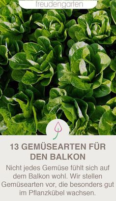 The best types of vegetables for balconies, planters or raised beds - Ideas for a vegetable garden on the balcony: with this vegetable it works! Balcony Planters, Balcony Garden, Types Of Vegetables, Planting Vegetables, Growing Vegetables, Unique Garden, Raised Vegetable Gardens, Vegetable Gardening, Veggie Gardens