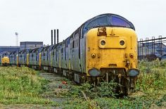 At Doncaster works on 22nd August 1982 55004 'Queens Own Highlander' heads a line up of seven withdrawn Deltics, followed by 55022/16/05/17/13/11 and 31264. (Andy Hoare) Train Posters, Railway Posters, Diesel Locomotive, Electric Locomotive, Abandoned Train, Abandoned Places, Rail Transport, Electric Train, Train Pictures