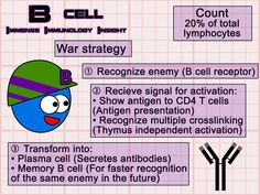 """clauars: medicowesome: immense-immunology-insight: An insight on the function of B lymphocyte """"B lymphocytes use a weapon called anti. Medical Coding, Medical Technology, Technology News, Energy Technology, Technology Articles, Nursing Tips, Nursing Notes, Icu Nursing, Lymphocyte B"""