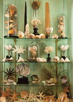 Love shells? Set up a display using glass domes and easel stands to show off your collection!