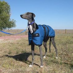 GREYHOUND coat custom made for your dog waterproof by COZYHORSE, $75.00