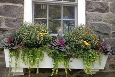 To Winter Garden and Landscape Ideas Ornamental cabbages, mums, and creeping jenny make up a delightful Fall window box.Ornamental cabbages, mums, and creeping jenny make up a delightful Fall window box.