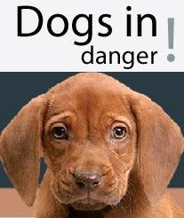 http://shelter.dogsindanger.com/admin/faqs.jsp The site has had lots of press coverage, and people have driven for hours to adopt dogs found on DogsInDanger. Over 80% of the dogs listed on the site have been saved. The site is run by a group of dedicated animal loving folks who want to help do what we can to save urgent dogs in shelters by gaining them invaluable adoption exposure.