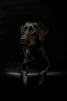 Jayde by Mark Cooper I would love to get this great of a picture of my black dog