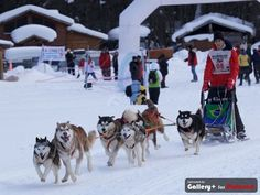 O brasileiro Julinho Casares venceu campeonato de trenós na Argentina. Ele competiu com cães da raça Malamute do Alasca.  (Foto: Johnny Duarte/Divulgação)