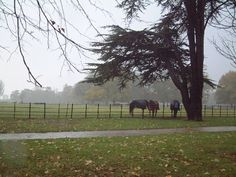 The drive of Osterley Park - they used to have a horse in the field there called Pavarotti