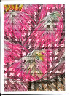 Gallery.ru / Фото #1 - ****flores***** - celita