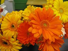 Gerber daisies come in all sorts of colors (not blue or purple). Local Color, Gerber Daisies, Wedding Centerpieces, Purple, Blue, Valentines Day, Daisy, Colors, Flowers