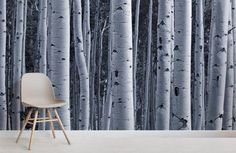 Silver Birch Forest Wallpaper Murals, custom made to suit your wall size by the UK's for murals. Custom design service and express delivery available. Silver Birch Wallpaper, Birch Tree Wallpaper, Forest Wallpaper, Wall Wallpaper, World Map Wallpaper, Kids Wallpaper, Flower Wallpaper, Birch Forest, Tree Forest