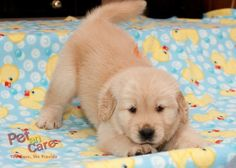 Buy #PetAccessories Online  Visit Our Website For #OnlineShopping of #PetProducts -www.petencare.com