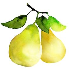 Find Group Pears Watercolor Painting On White stock images in HD and millions of other royalty-free stock photos, illustrations and vectors in the Shutterstock collection. Watercolor Fruit, Wreath Watercolor, Easy Watercolor, Watercolor Flowers, Watercolor Paintings, Watercolors, Acrylic Paintings, Vegetable Painting, Food Painting