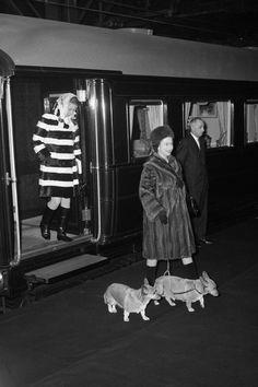 """""""「CORGI」の「COR」はウェールズ語で""""小人""""、「GI」は""""犬""""を意味する。""""小人の飼っていた犬""""または、コーギーが妖精の馬車を引いていたというウェールズ地方の伝説に由来するという説もある。"""""""