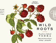 Wild Roots Vodka Packaging by Kristin Casaletto | Inspiration Grid | Design Inspiration