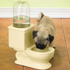 toilet water bowl - Keeping pets away from drinking water from the toilet can get frustrating for pet owners; for such cases, this Toilet Water Bowl will be a fun and . Dog Toilet, Toilet Bowl, Funny Animals, Cute Animals, Stupid Animals, Creative Inventions, Crazy Inventions, Awesome Inventions, Awesome Gadgets