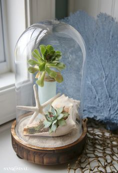 Coastal Cloche Decor Ideas: Capture a bit of summer under a cloche or glass bell jar. Explore these beautifully chic coastal cloche decor ideas for your home.