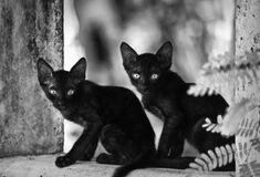 Black Cat - 34 Pictures