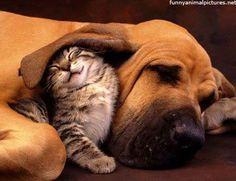 Dog ear blanket